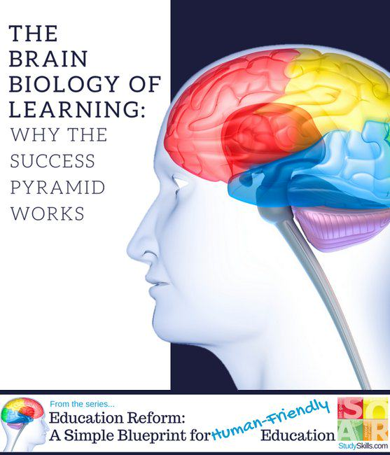The Brain Biology of Learning:<br>Why the Success Pyramid Works